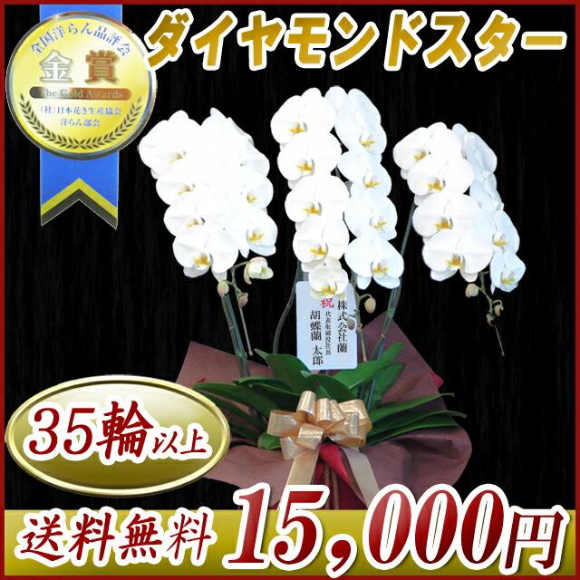 大輪胡蝶蘭3本立ち 15,000円
