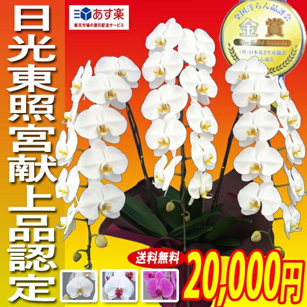 大輪胡蝶蘭3本立ち 20,000円