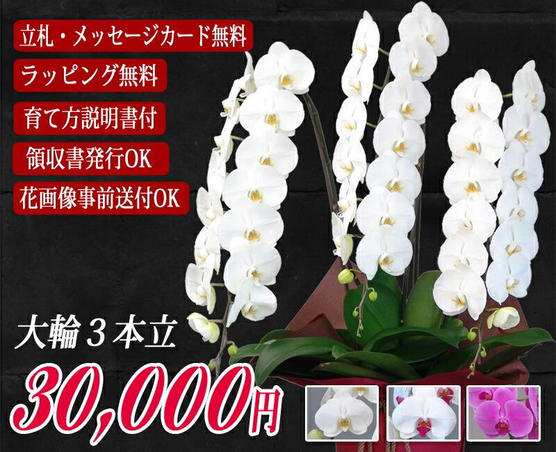 今月のピックアップ 胡蝶蘭3本立ち 大輪30,000円