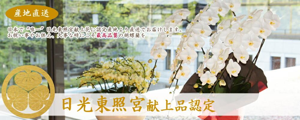 日光東照宮献上花
