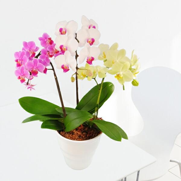 色とりどりの3種寄せ植えおまかせMIX3本立