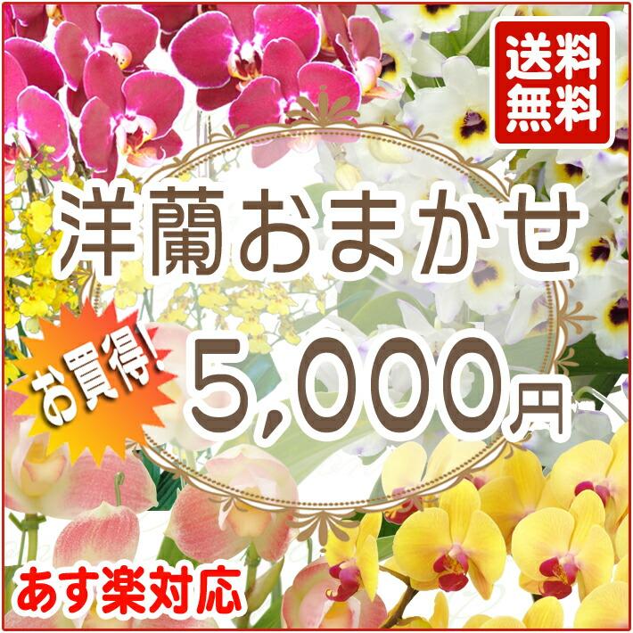 洋蘭おまかせ 5,000円