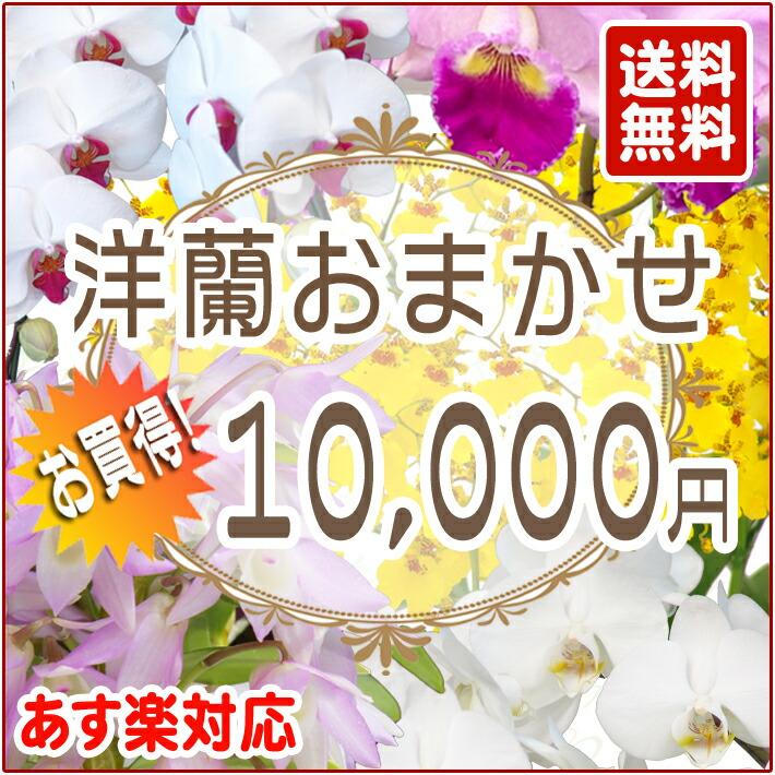 洋蘭おまかせ 10,000円