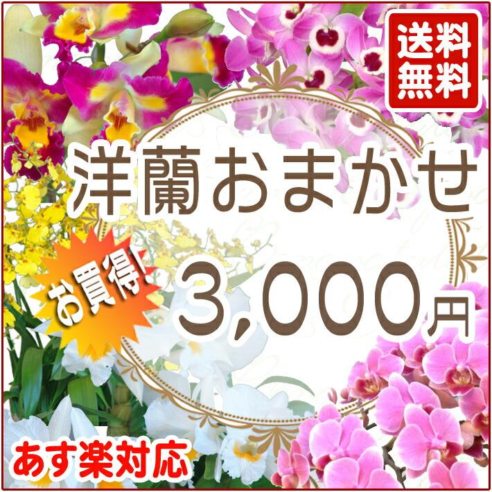 洋蘭おまかせ 3,000円