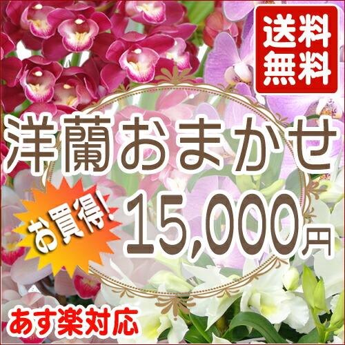 洋蘭おまかせ 15,000円