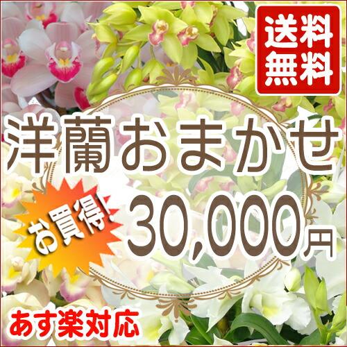 洋蘭おまかせ 30,000円