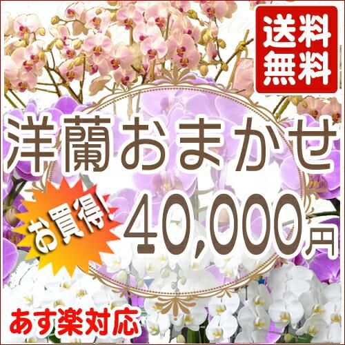 洋蘭おまかせ 40,000円
