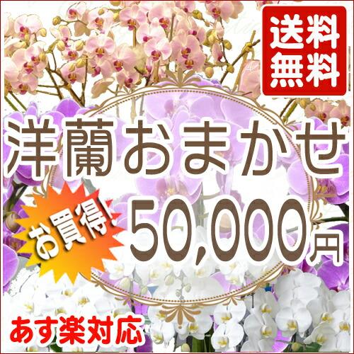 洋蘭おまかせ 50,000円