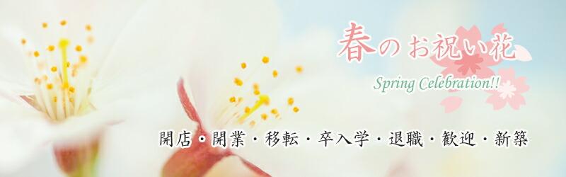 春のお祝い花