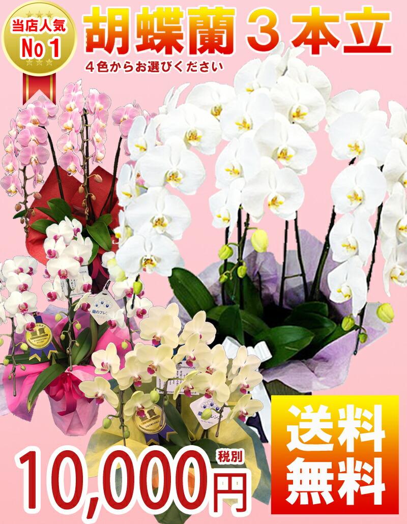 胡蝶蘭3本立10,000円