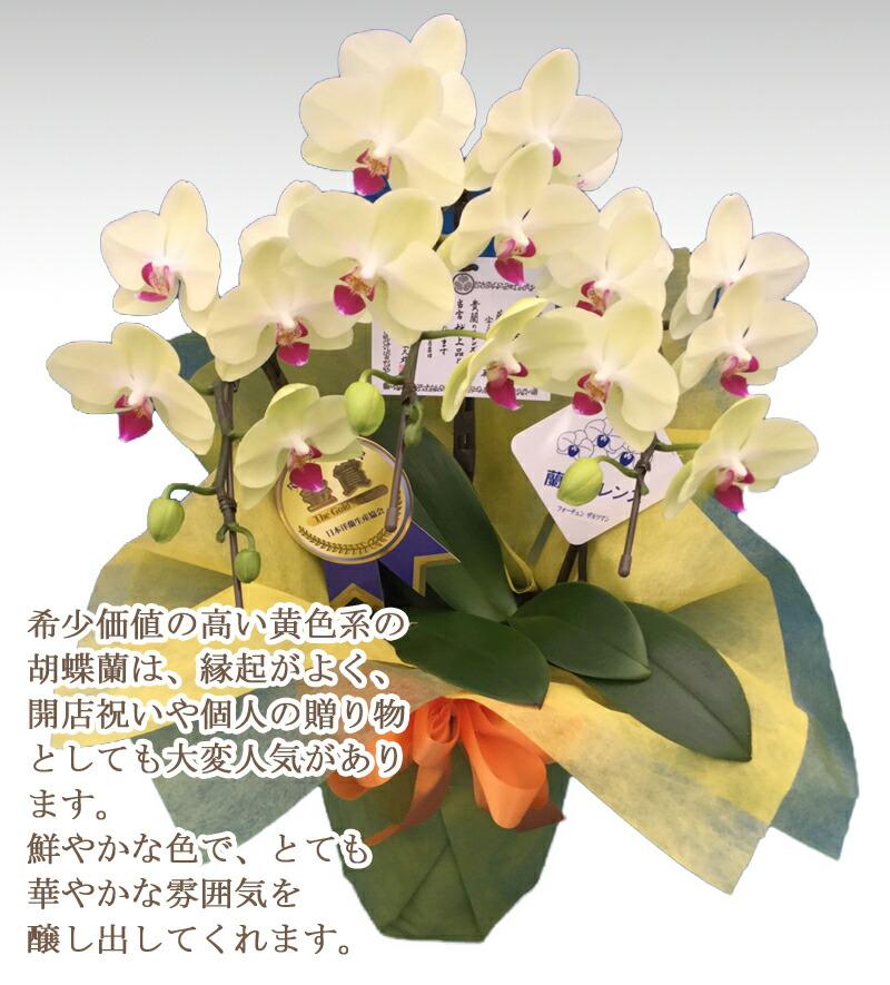 カラー黄色
