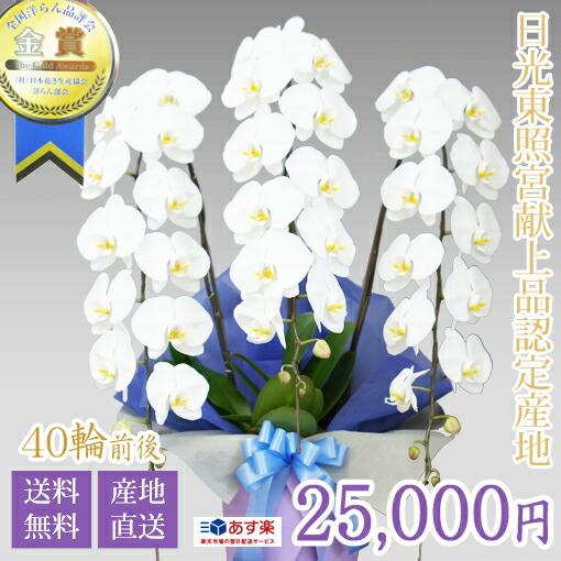 大輪胡蝶蘭3本立ち 25,000円