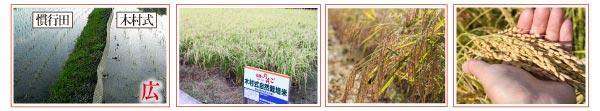 木村式自然栽培米