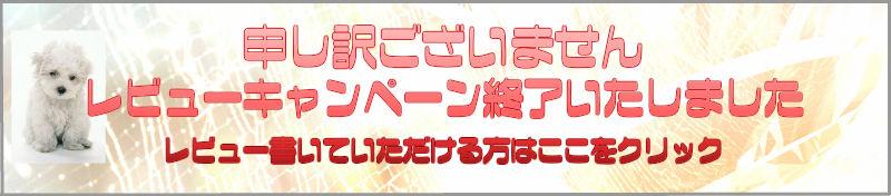 着物たとう紙日本製窓枠付レビューを書いて100円OFF
