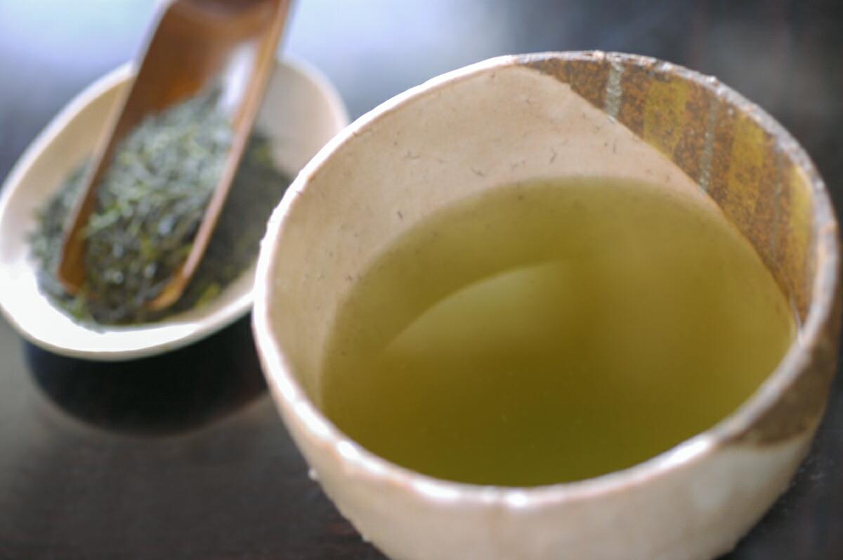 秋番茶 摘み取り前の芽