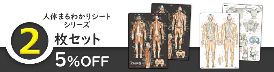 人体まるわかりシート 2枚セット(筋肉シート&骨と関節シート)