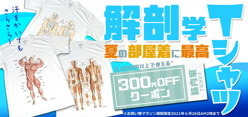 解剖学Tシャツがおすすめ!300円クーポン使えます