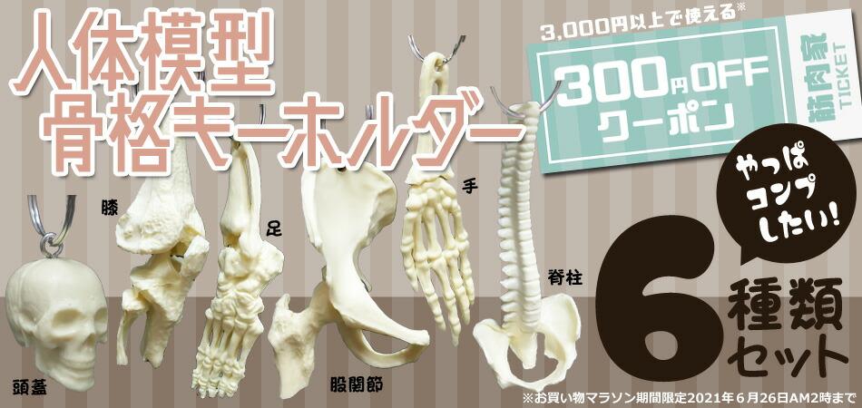 人体模型 骨格キーホルダー コンプリート6種類セット