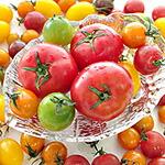 北海道産トマト