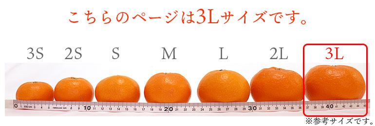 みかんサイズ表3L