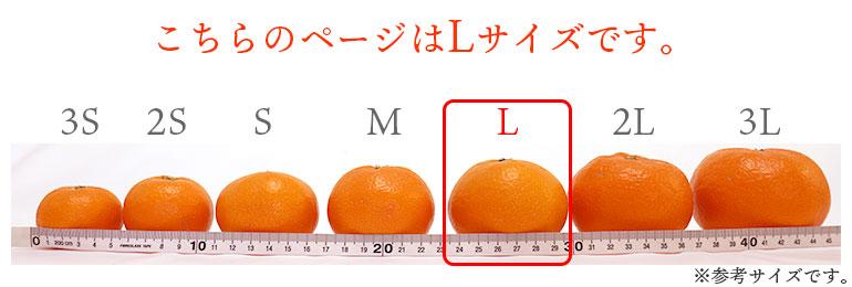 みかんサイズ表L