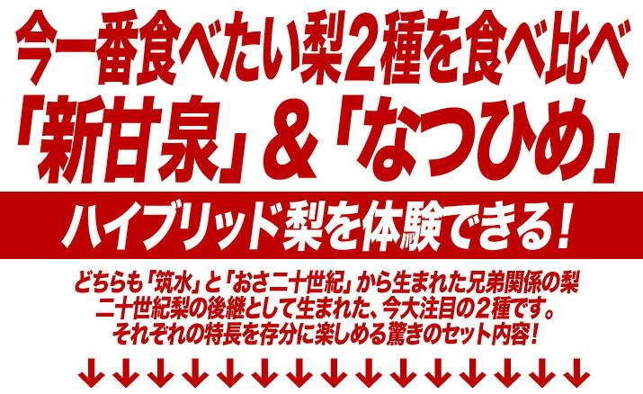 鳥取県のハイブリッド梨「新甘泉」と「なつひめ」のセット