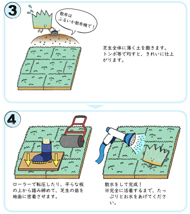 ケンタッキーブルーグラス植栽方法2