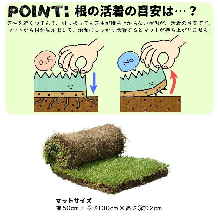 高麗芝マットの植栽方法1