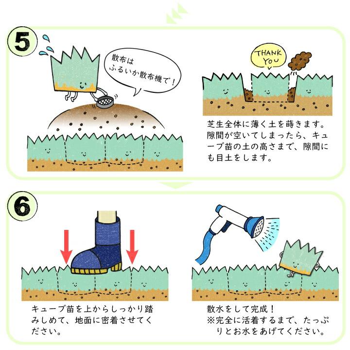 キューブ苗の施工方法2