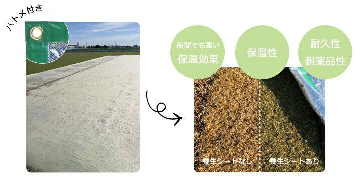 芝生養生シート使用前使用後