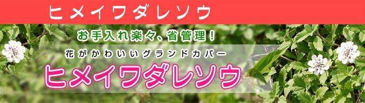 ヒメイワダレソウ ポット苗 姫岩垂草