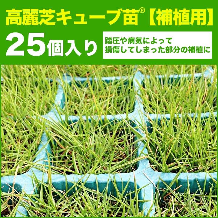 補植用高麗芝キューブ苗 25個入り