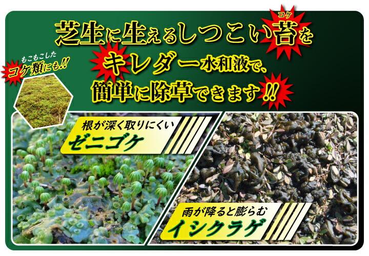 苔、イシクラゲに効くキレダー水和剤