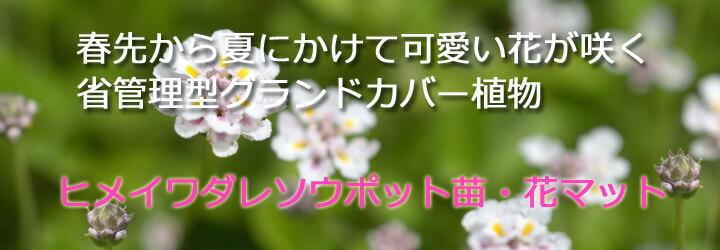 ヒメイワダレソウポット苗・花マット