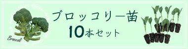 10苗セットへ
