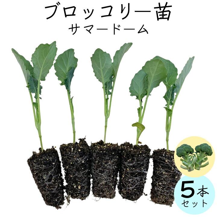 ブロッコリー5本