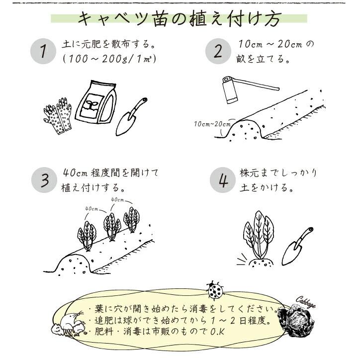 植え付け方法