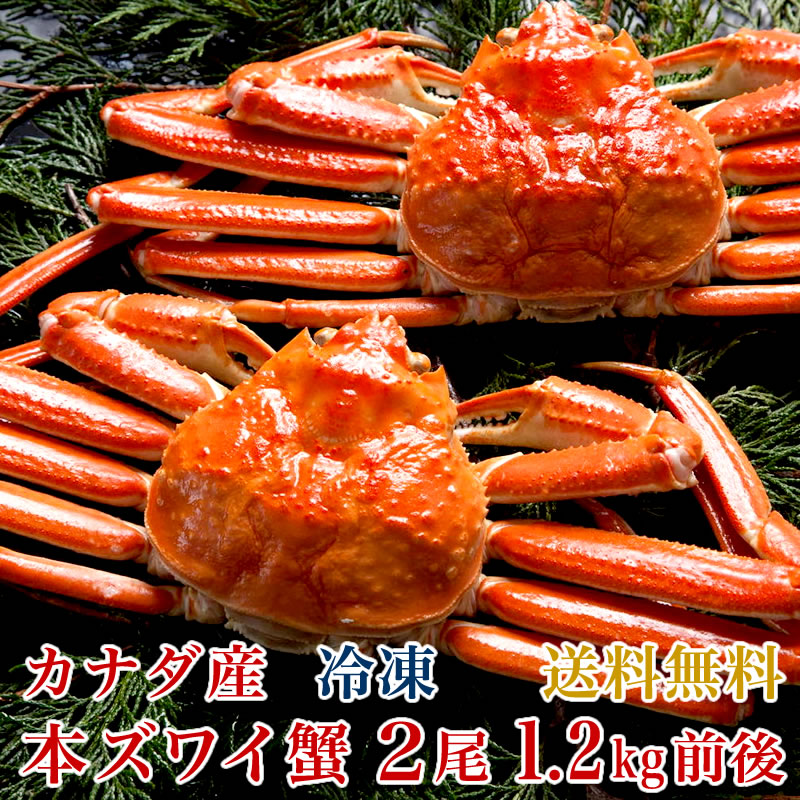 【送料無料】カナダ産 本ズワイ蟹 2尾(総量1.2kg前後)【濃厚な蟹みそ】【ギフト 贈答】【かに 蟹 カニ】