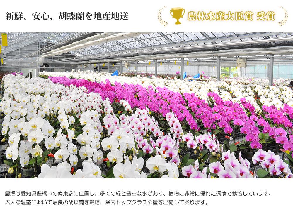 農林水産大臣賞受賞 新鮮、安心、胡蝶蘭を地産地送