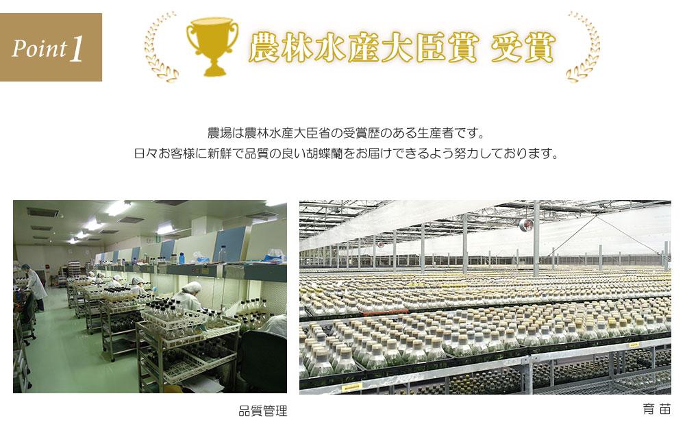 農林水産大臣賞受賞 農場は農林水産大臣省の受賞歴のある生産者です。日々お客様に新鮮で品質の良い胡蝶蘭をお届けできるよう努力しております。