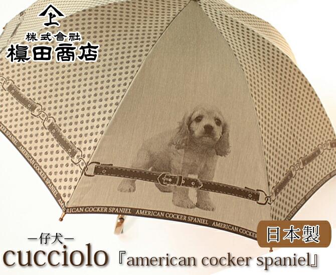 cucciolo 『american cocker spaniel』