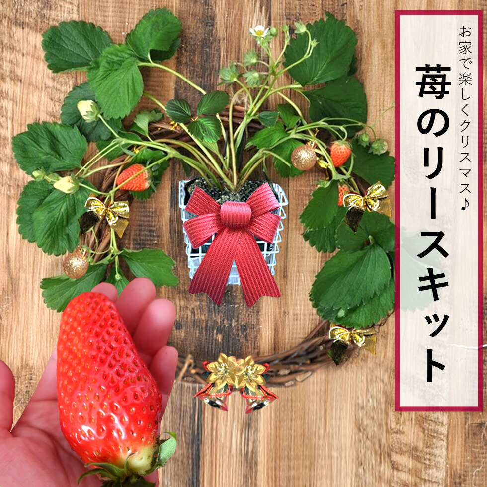 苺のリースTOP