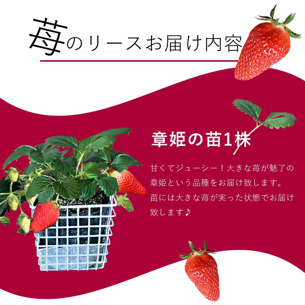 苺のリースお届け内容