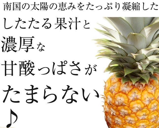 沖縄 石垣島産 パイン パイナップル