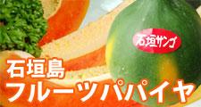 石垣島フルーツパパイヤ(石垣珊瑚)