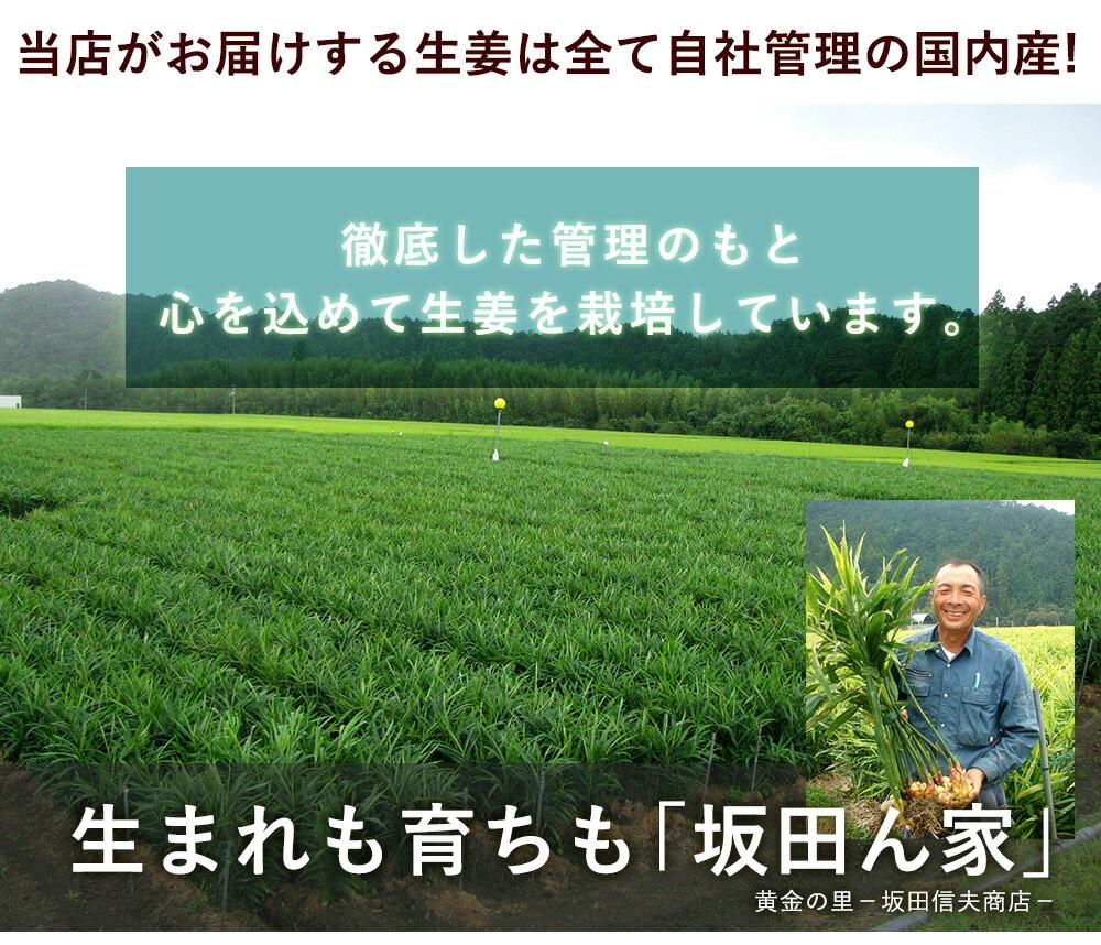 徹底した管理のもと心を込めて生姜を栽培