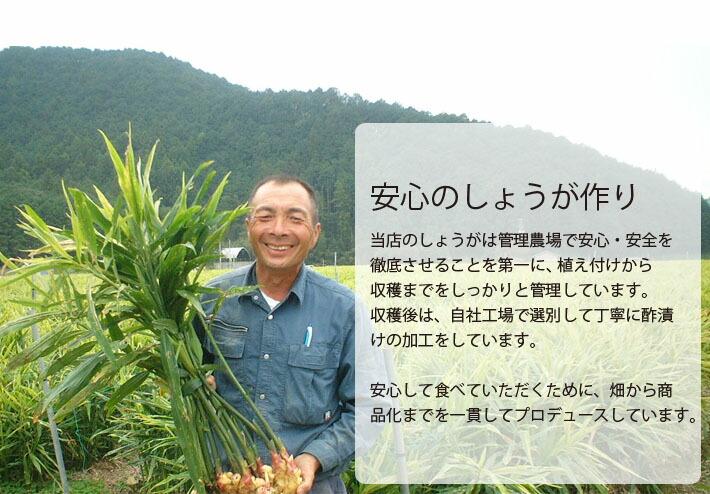 安心の生姜作り