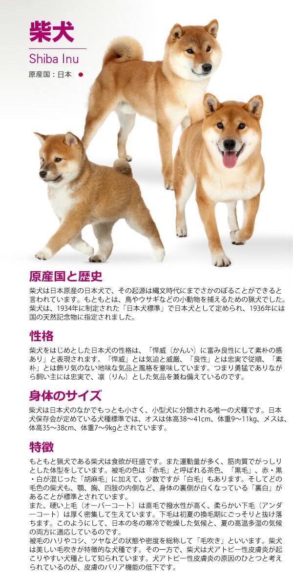 ロイヤルカナン 柴犬 成犬用