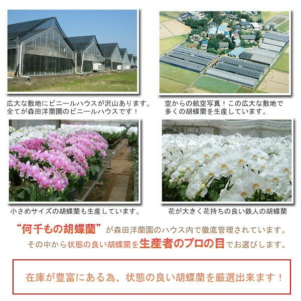 森田洋蘭園