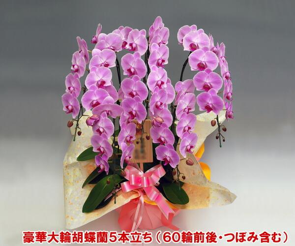 p5f60large1.jpg